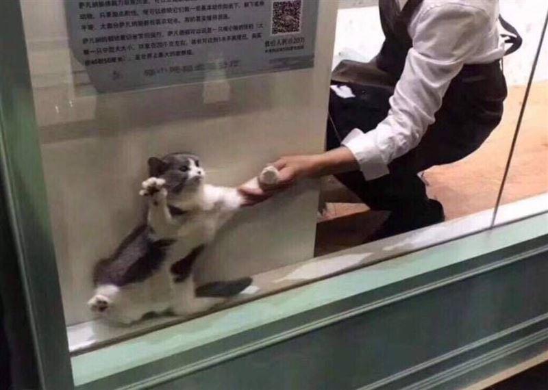 Застрявший в витрине кот позабавил пользователей Сети