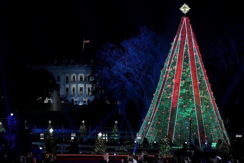 Мужчина забрался на рождественскую ель перед Белым домом