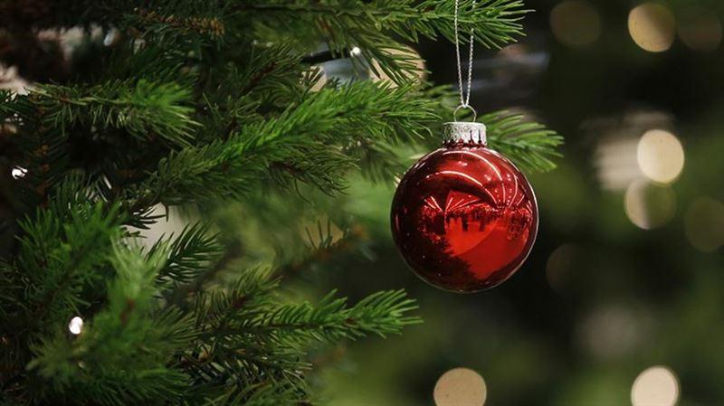 Учёные нашли способ превращать новогодние ёлки в сладости