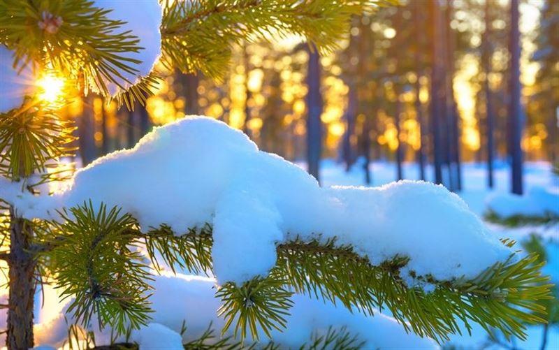 Синоптики прогнозируют солнечную погоду в регионах Казахстана