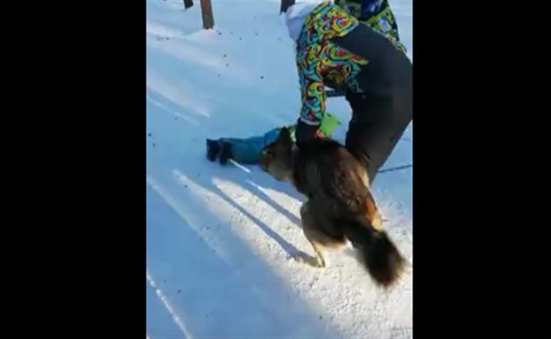 «Зоотерапия»: Волк набросился на ребенка в зоопарке Челябинска