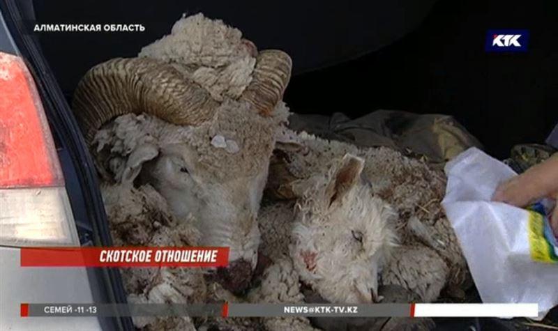 В Алматинской области орудовала банда скотокрадов