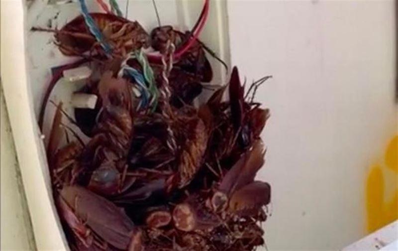 Мужчина обнаружил в телефоне десятки тараканов