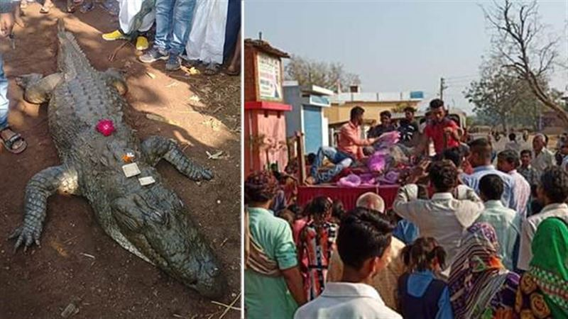В Индии «дружелюбного крокодила» хоронили 500 человек