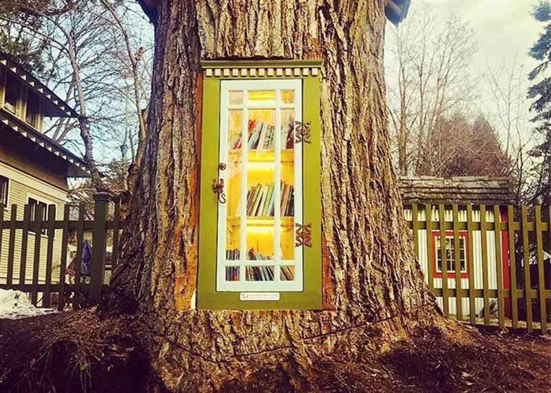 Библиотекарша превратила 110-летнее дерево в библиотеку