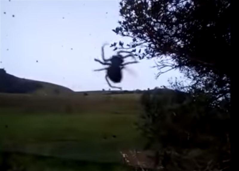 В Бразилии пошел «дождь из пауков»
