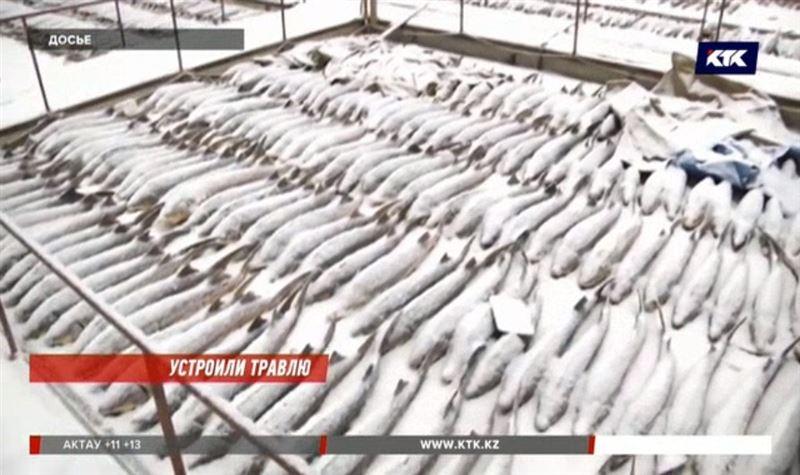Аммиак убил больше 60 тонн осетра в Урале
