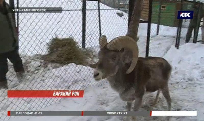Краснокнижное животное удерживал у себя дома житель ВКО