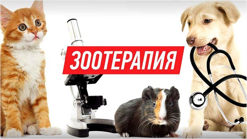 Зоотерапия, или как животные лечат человека