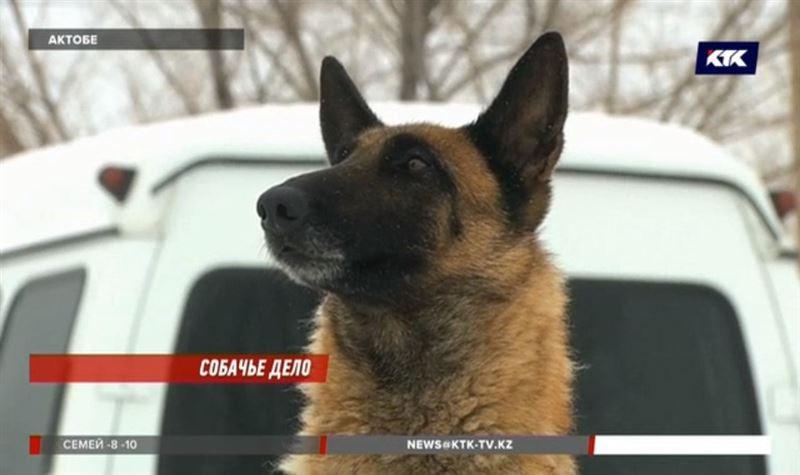 В Актобе показали собак, которые раскрыли 400 преступлений