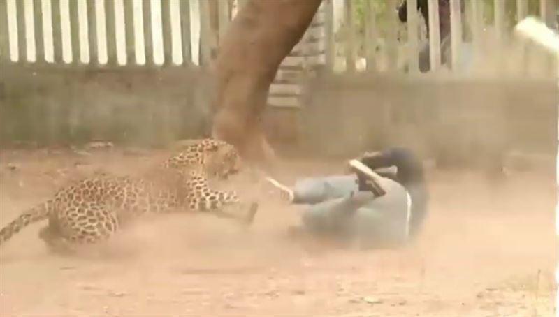 Леопард ранил трех человек на улицах индийского города