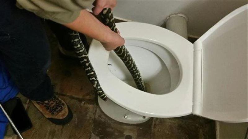 Женщину укусила спрятавшаяся в унитазе змея