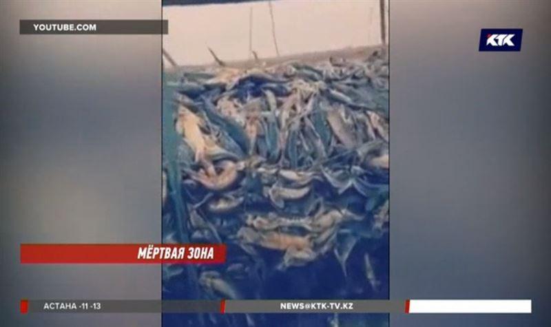 На осетровом заводе под Атырау погибла вся рыба