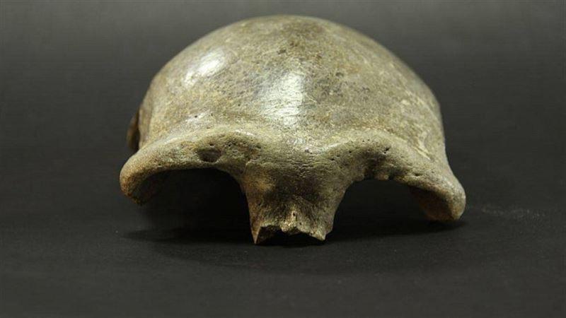 В Монголии обнаружен череп самого раннего человека