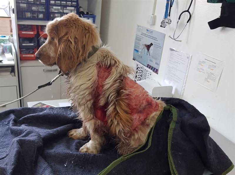 ШОК (18+): В Алматы живодеры сняли скальп с собаки: животное нуждается в срочной помощи