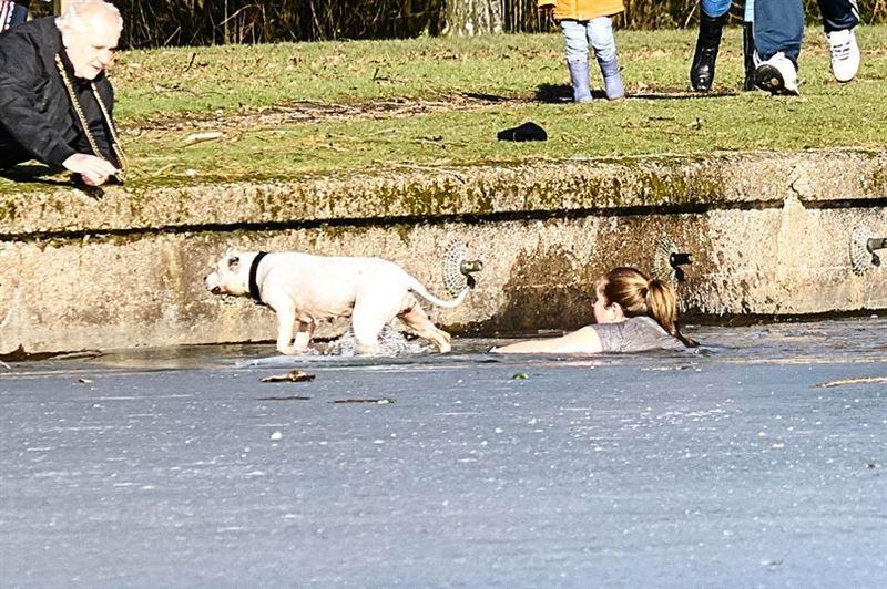 В Великобритании женщина прыгнула в ледяное озеро, чтобы спасти пса
