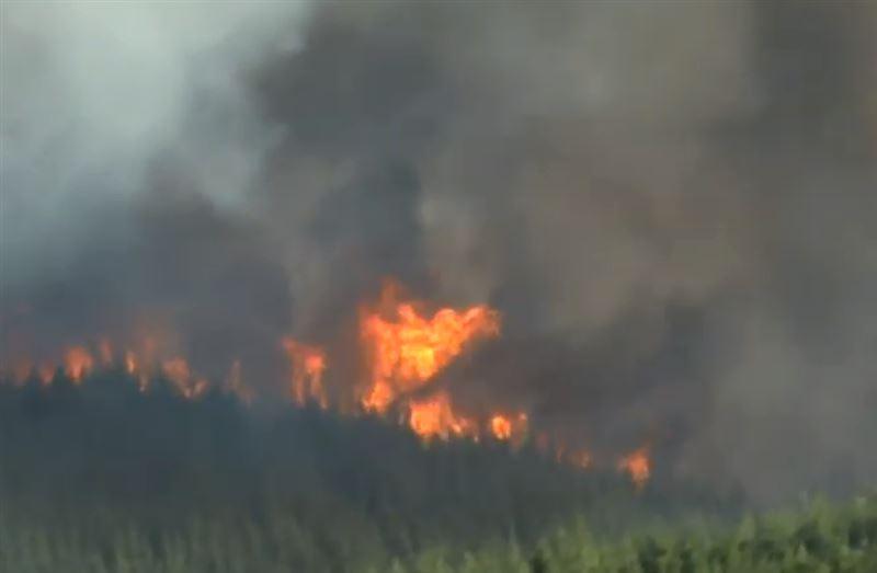 Пожар на площади почти в 2000 гектаров бушует в Новой Зеландии