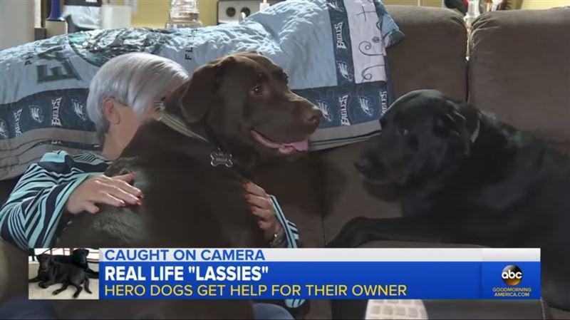 Собаки спасли хозяйке жизнь, приведя к ней соседей