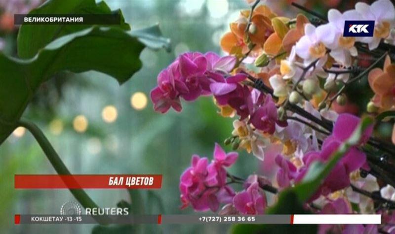 В королевском ботаническом саду готовятся к фестивалю орхидей