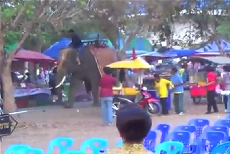 Слон схватил девушку и стал ею размахивать