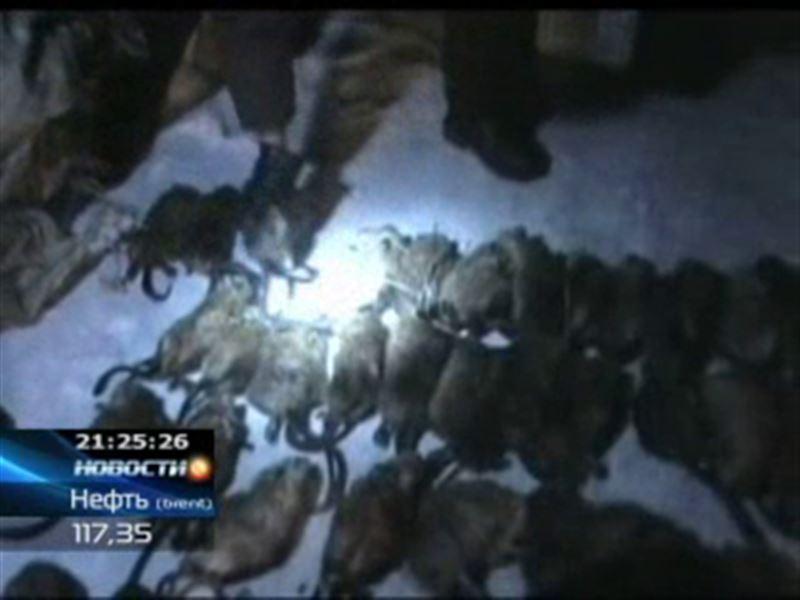 В Карагандинской области задержали браконьеров