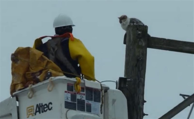 В Чикаго кошка залезла на столб и не смогла спуститься самостоятельно