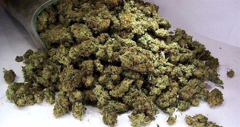 У жителя Алматы изъяли почти 30 килограммов марихуаны