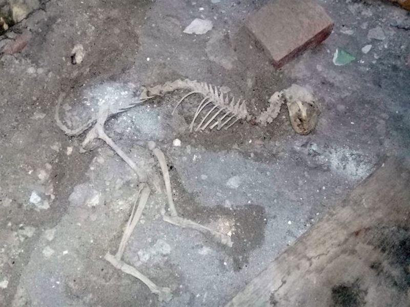 В Узбекистане мужчина случайно обнаружили скелет неизвестного науке животного
