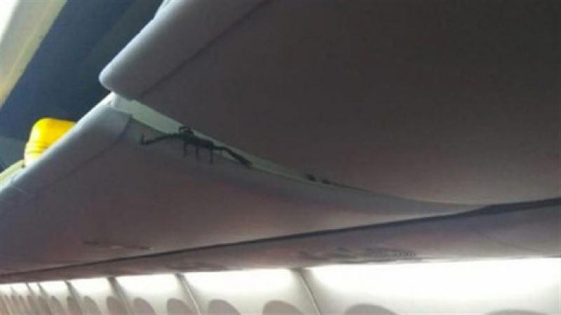 Скорпион вызвал панику на борту самолета