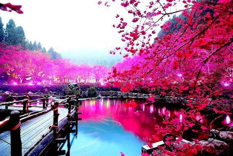 Фестиваль «Японская весна» пройдет в Астане