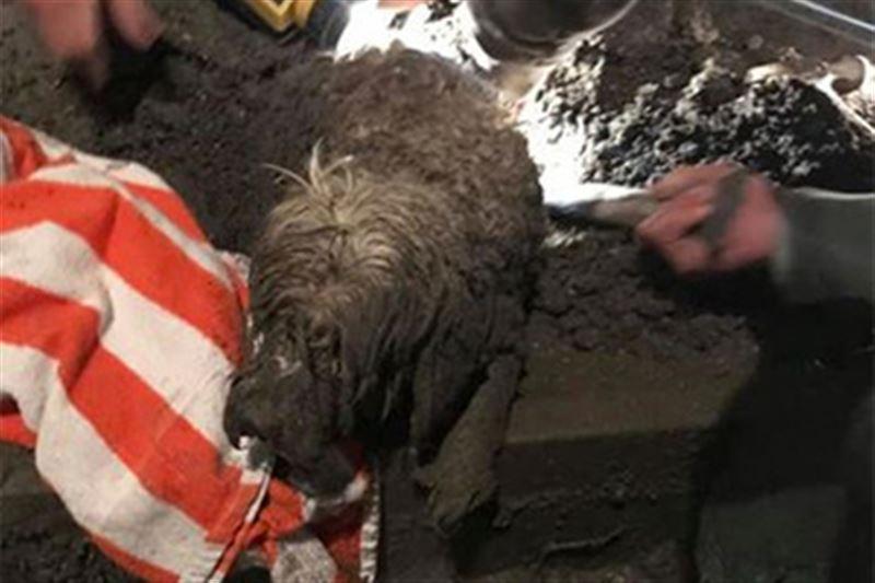 Во Флориде спасли собаку, застрявшую в цементе