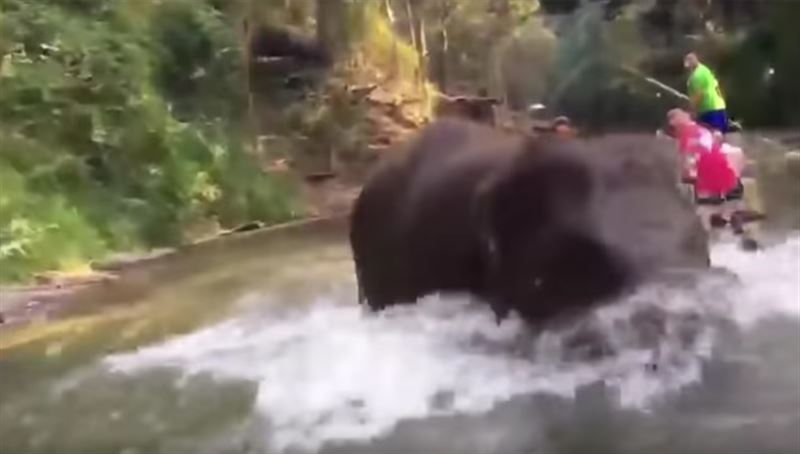 Тайский гид снял на видео нападение слона на туристов