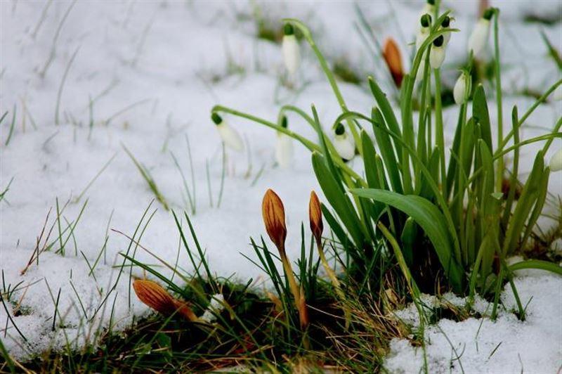 Какой будет погода в Казахстане 4 марта