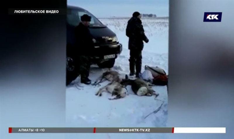 В СКО поймали браконьеров, убивших 9 сибирских косуль