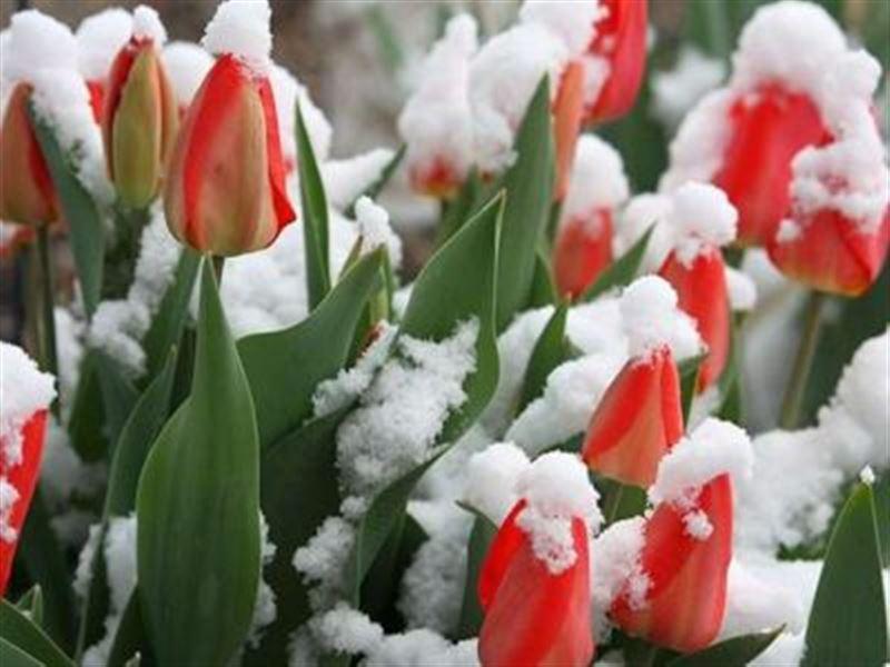Снег, туман и грозы обещают синоптики 8 марта в Казахстане