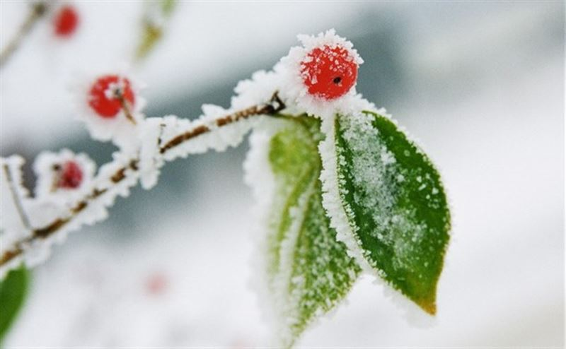 Синоптики рассказали, какой будет погода в Казахстане 10 марта