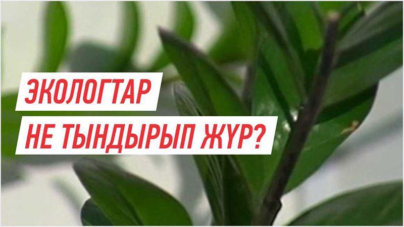 Азаматхан Әміртай: Әлемдік ұйым Қазақстанға миллиардтаған айыппұл салуы мүмкін