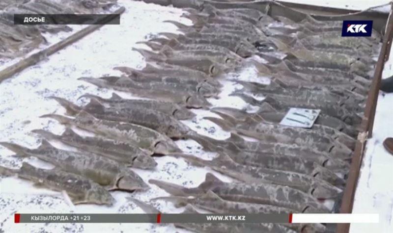 Рыбы в Урале погибло на полмиллиарда тенге