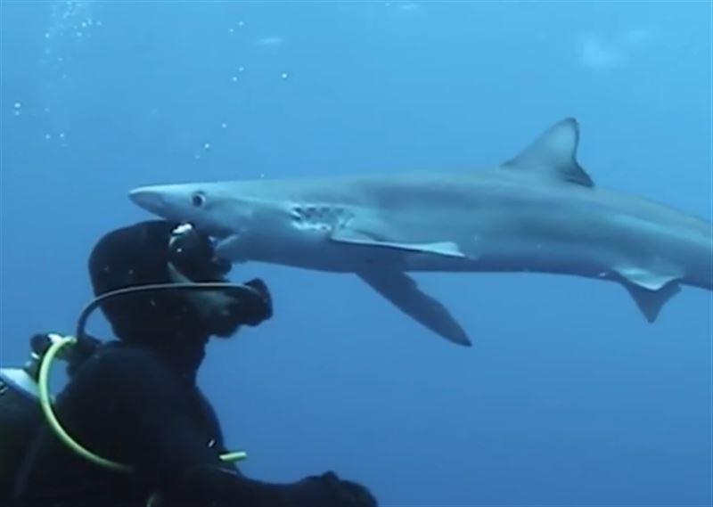 Аквалангист столкнулся с акулой, которая пыталась его укусить