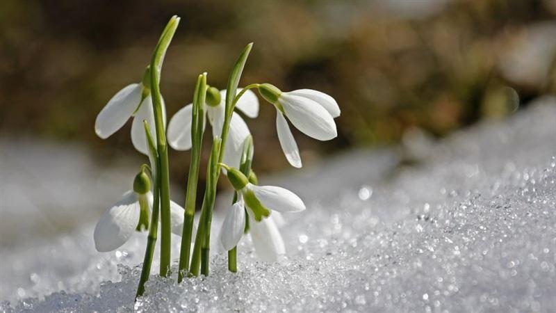 Какой будет погода в Казахстане в понедельник, 18 марта