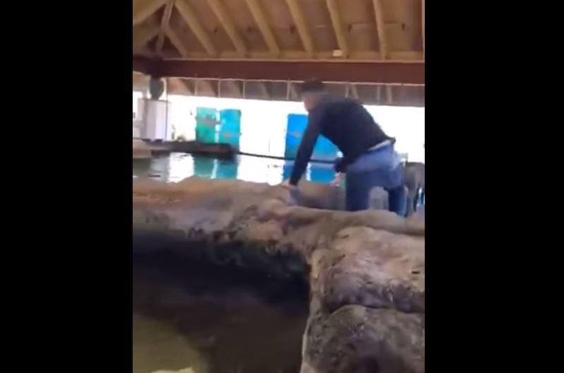 Подросток прыгнул в бассейн с акулами и выжил