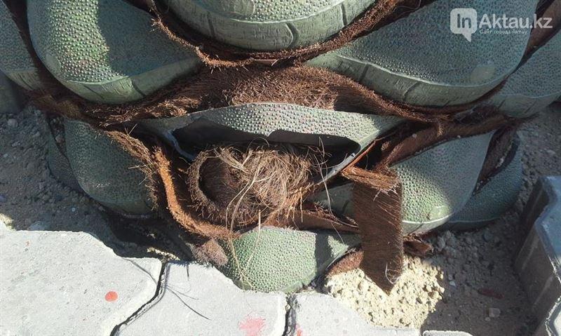 На набережной Актау вандалы сломали пальмы
