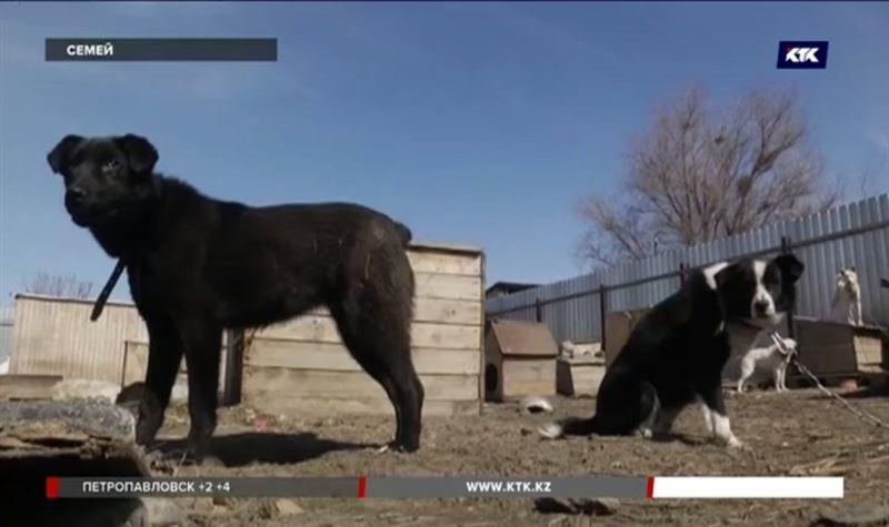 Собачий приют в дачном массиве Семея требуют закрыть, а животных усыпить