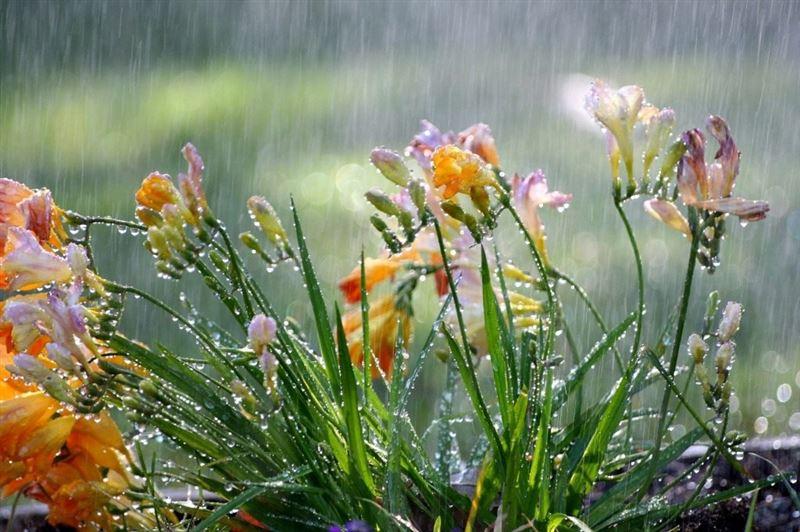 Сильные дожди и ветер прогнозируются в Казахстане 31 марта