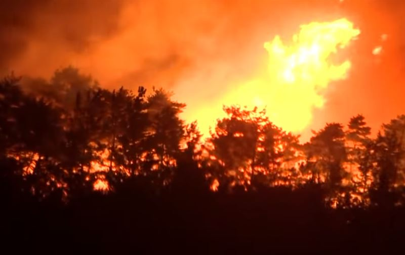 В Южной Корее введен режим ЧС из-за лесных пожаров