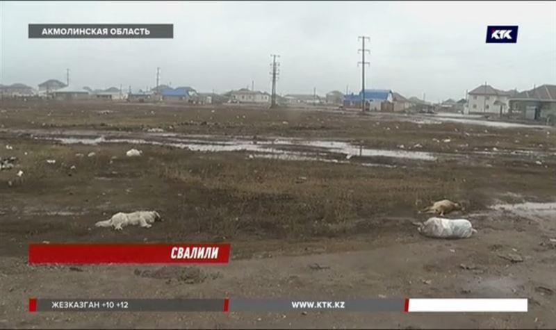 Село под Нур-Султаном завалено мусором и собачьими трупами