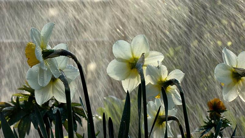 Прогноз погоды по Казахстану на четверг, 11 апреля