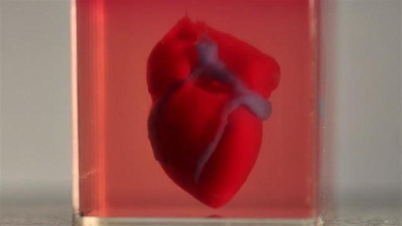 Ученые впервые напечатали на 3D-принтере сердце с сосудами