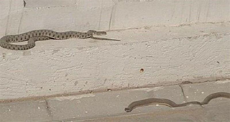 Полчище змей в Актау напугало местных жителей