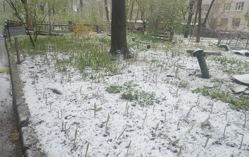 Снег в середине апреля выпал в Казахстане